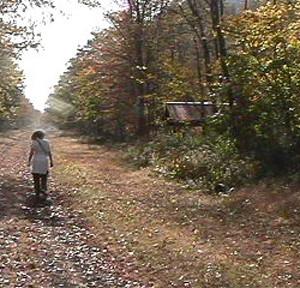 Trail in the Hollidaysburg Hub